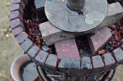 organic wine and biodynamic wine