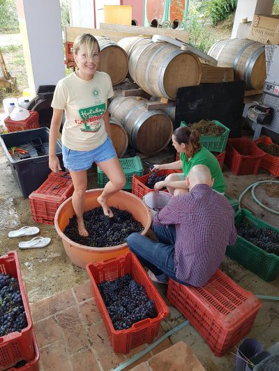 grape pressing by feet